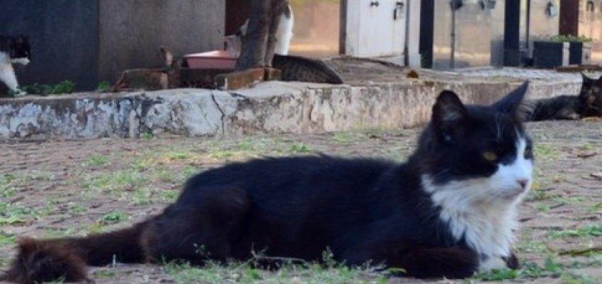 Raquel Montero: Carnificina de gatos no cemitério da saudade