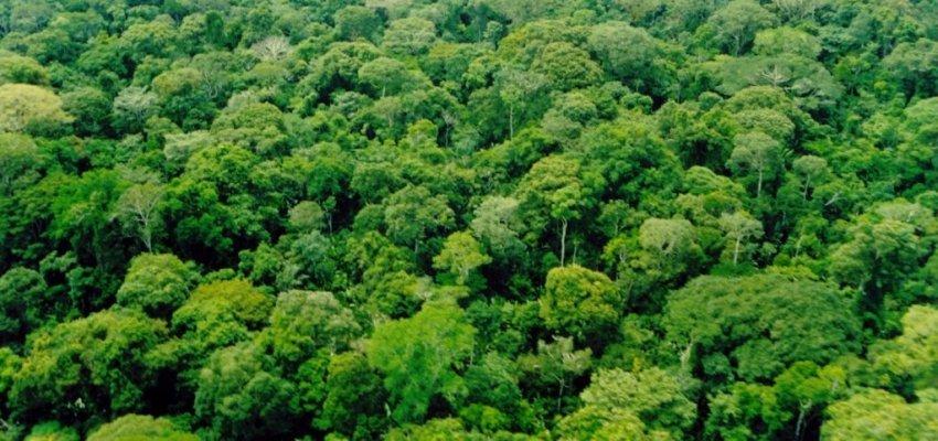 Brasil reduz desmatamento com fiscalização e medidas de inclusão